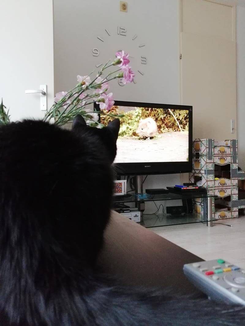 """KeeK op de WeeK 21- """"SPA"""" Moestuin, Kijk-Tip en Katten TV 23 moestuin KeeK op de WeeK 21- """"SPA"""" Moestuin, Kijk-Tip en Katten TV"""