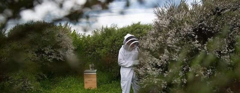 Het wonder van Manuka honing 75 manuka Het wonder van Manuka honing Food & Drinks