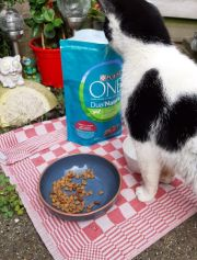 Had Toulouse ook Purina Dual One?