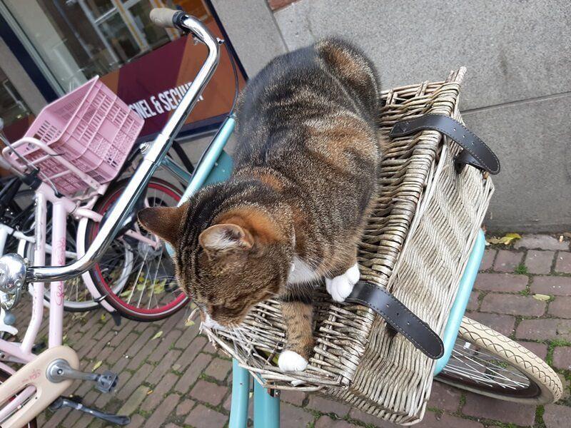KeeK op de WeeK 43- Kat in de Stad & Chagrijnig van de Griep 21 kat KeeK op de WeeK 43- Kat in de Stad & Chagrijnig van de Griep