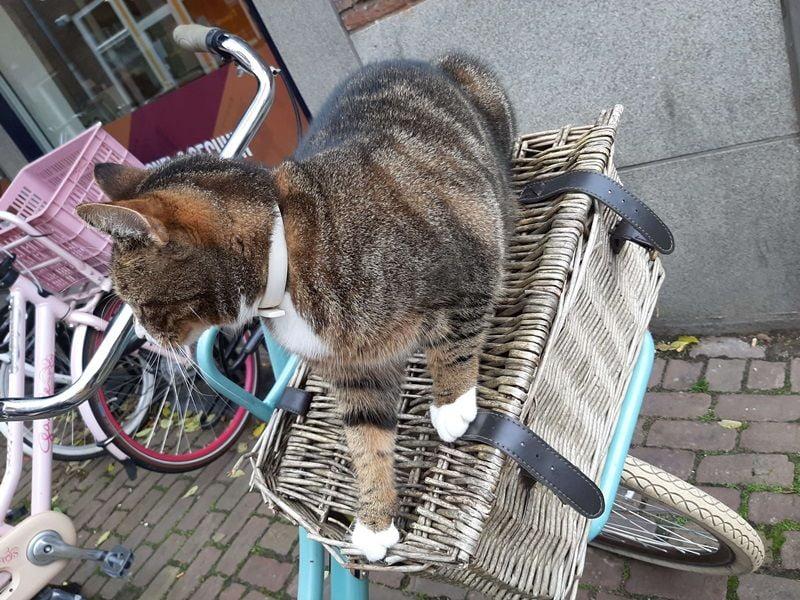 KeeK op de WeeK 43- Kat in de Stad & Chagrijnig van de Griep 19 kat KeeK op de WeeK 43- Kat in de Stad & Chagrijnig van de Griep