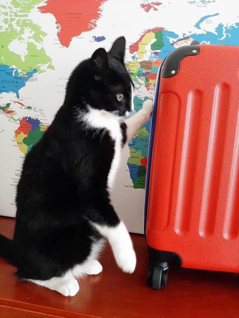 Wereldkaart? Check! Koffer? Check! Ga je mee op Reis? 27 wereldkaart Wereldkaart? Check! Koffer? Check! Ga je mee op Reis?