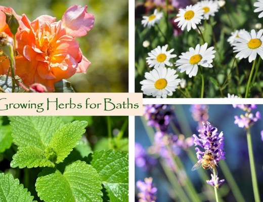Growing Herbs for Baths