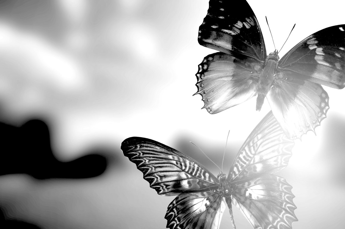 The Butterfly Stories