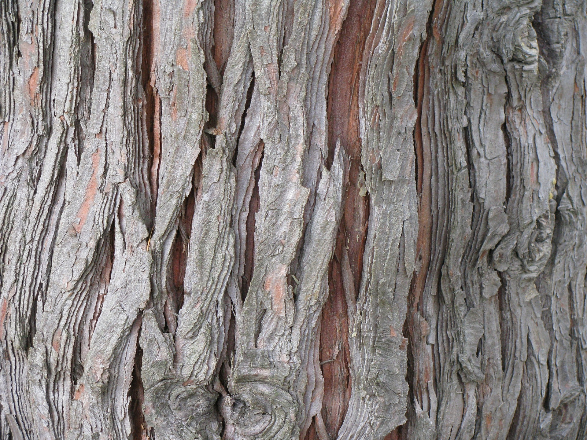 Cedarwood essential oil is steam distilled from the bark and foliage of the cedarwood tree. It has a clean, woody scent with a faint undertone of sandalwood