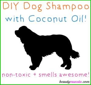 DIY Coconut Oil Shampoo for Dogs