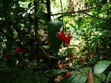 Amboro national parque (7)