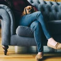 Idealne rasy psów dla zapracowanych ludzi