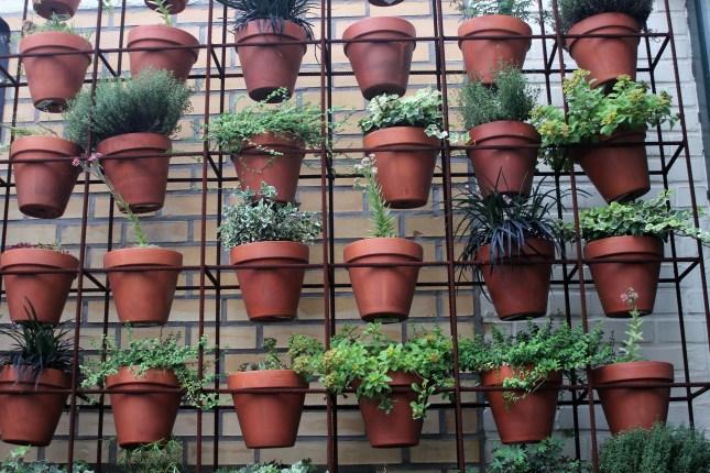 Jakie rośliny idealnie sprawdzą się w sypialni?