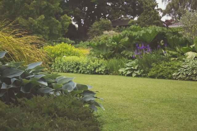 Rośliny w ogrodzie, które odstraszą komary