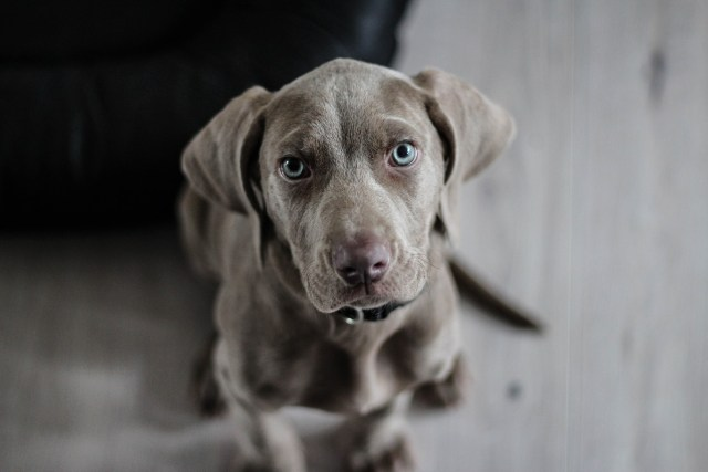 Jak wybrać psiego towarzysza?