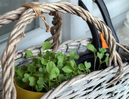 Rośliny uprawne, które można hodować w domu!