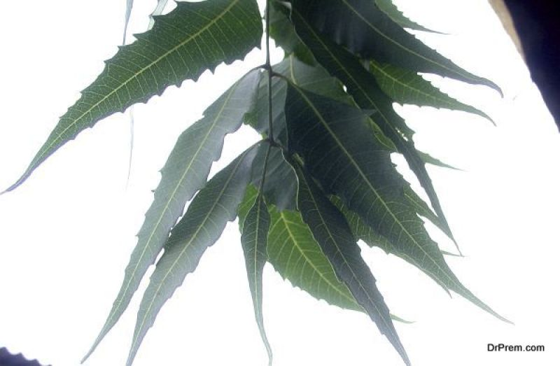 Neem from India