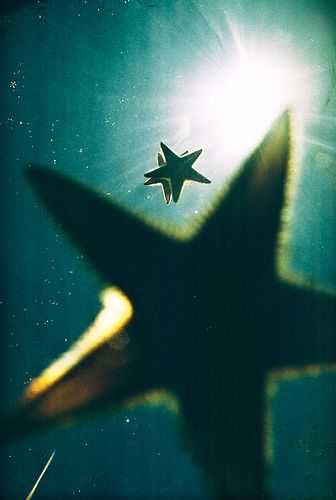 profumo-stella