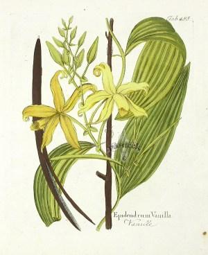 profumo-byredo_inez&vinoodh-vanilla