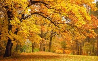 viaggio-olfattivo-Gilles -Thevenin-Lubin-bosco-querce