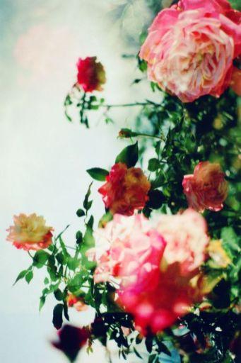 viaggio-olfattivo-Gilles -Thevenin-Lubin-rose