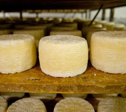 Silvio-Ruocco-Carthusia-formaggio