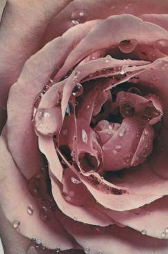 profumo-Eau-Plurielle-Diptyque-rosa-3