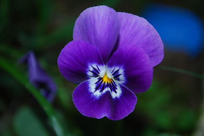 Aromatics-in-White-violetta