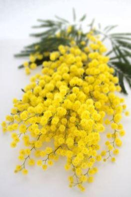 Bertrand-Duchaufour-I-Miss-Violet-note-olfattive-mimosa