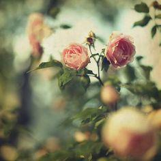 Etienne-de-Swardt-Questionario-olfattivo-rose-2