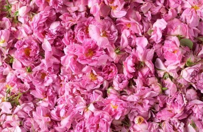 pomelo-paradis-atelier-cologne-note-di-cuore-rose-bulgara