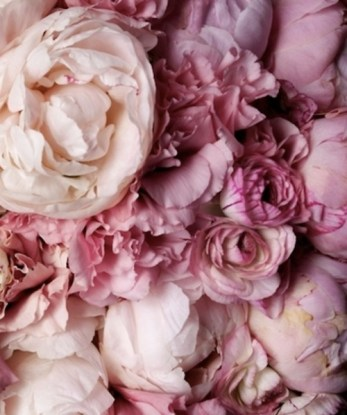 Valentina-Pink-profumo-peonia
