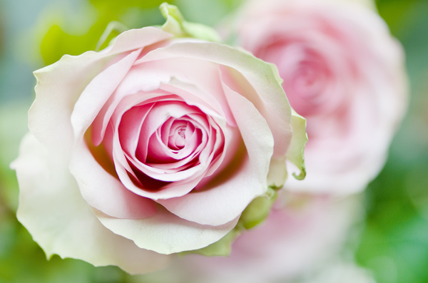 Valentina-Pink-profumo-rosa-di-maggio-2