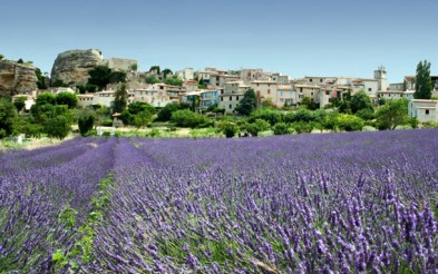 perfume-questionnaire-Robert-Gerstner-france-provence-lavenderfields-dd