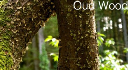perfume-questionnaire-Robert-Gerstner-oud-wood