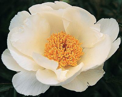 karl-bradl-aedes-de-venustas-fiori-4
