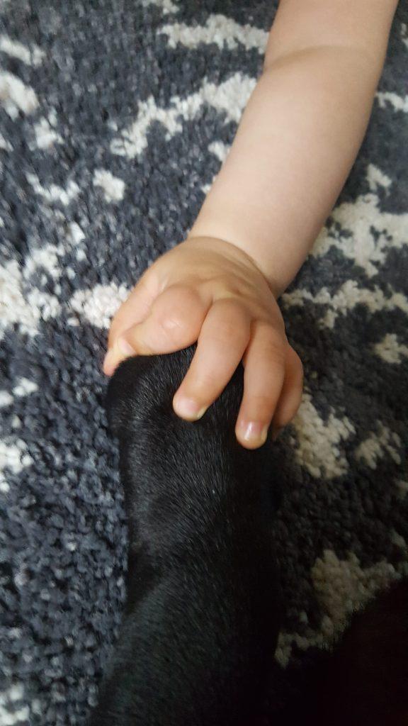 Бебе е хванало куче за лапата.
