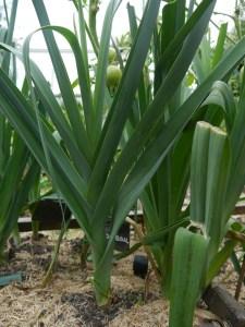 Soupe des hortillons @ Jardin de la Tour | Beauvais | Hauts-de-France | France