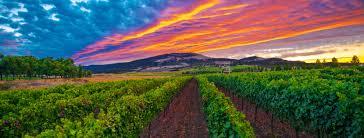 Vineyard - HDR