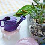 Mini Garden. Mini Me. Miniature Garden for Kids to Tend.