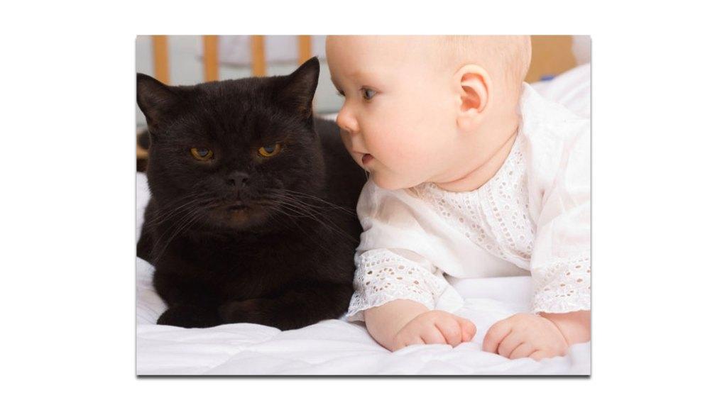 gatos y bebes