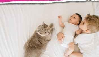 ¿Pueden convivir sin problemas un gato y un bebé recién nacido?