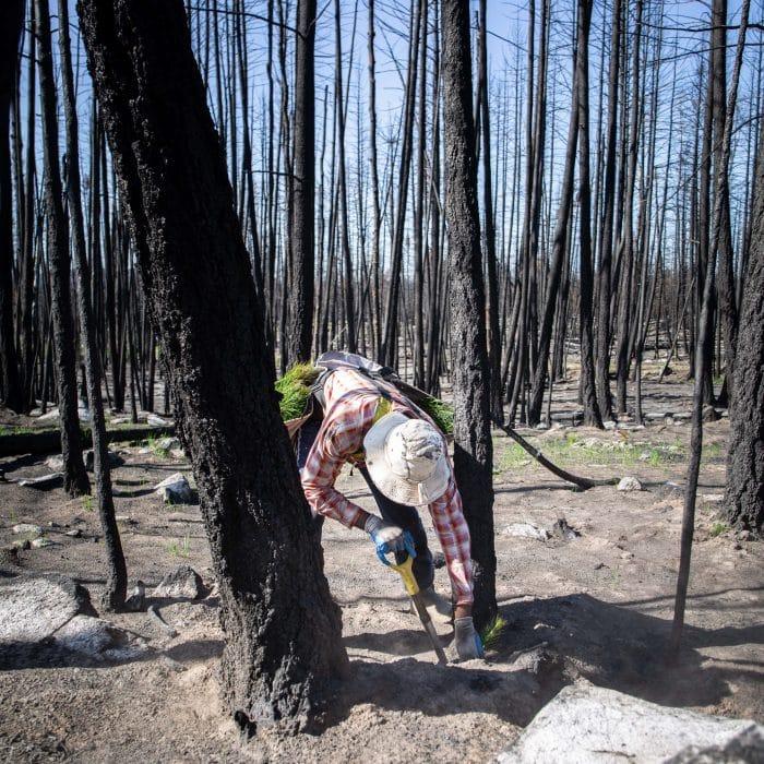 Bäume pflanzen BeBetter OneTreePlanted