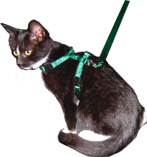 cat harness - collar