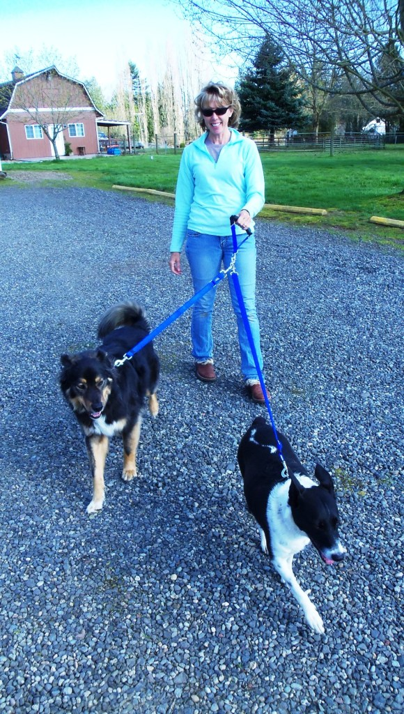 double dog walker - one long one short