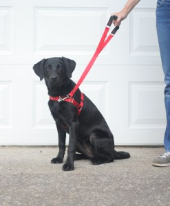 front lead harness - red