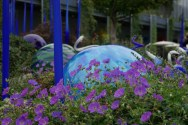 2017-09-09-Chihuly Garden and Glass (18)