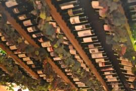 Love that ceiling of wine bottles