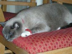 Sissi - my cat