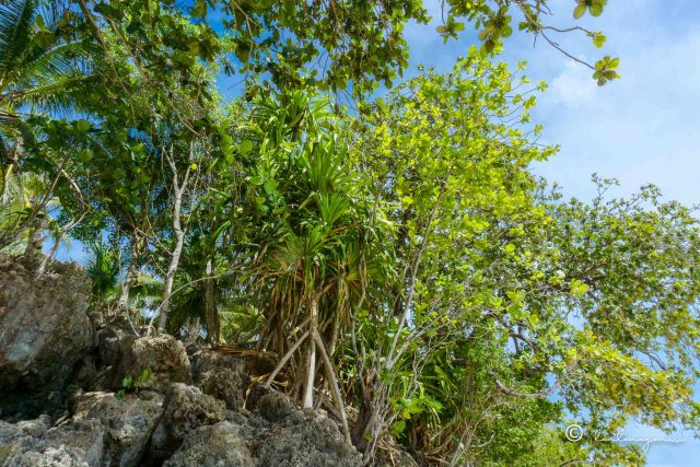 plants growing on top of the rock formations in jakka resort in governor generoso davao occidental philippines