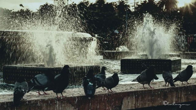 pigeons and fountain in the city center of casablanca