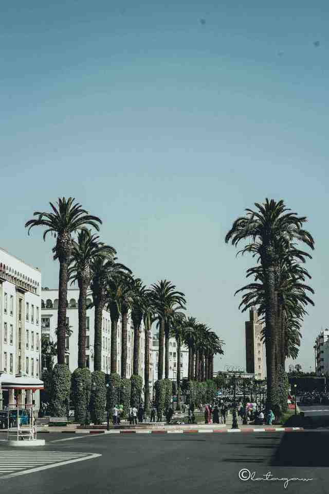 pine trees at rabat main plaza morocco