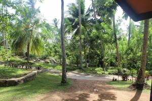 Jungle Beach Hostel