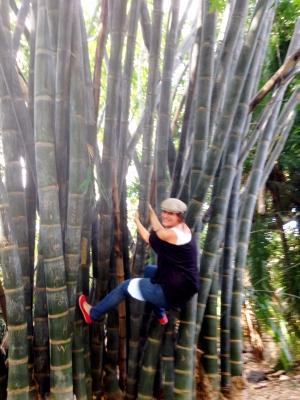 climbing Bamboo